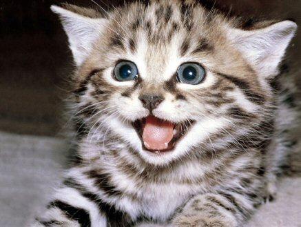 Frases Para Amantes De Los Gatos I Mascot House