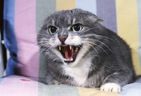 Territorialidad gatos