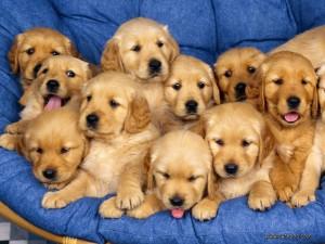 Cuidado-Perros-recién-nacidos