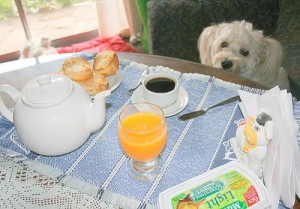 alimentacion-perro