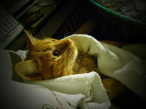 baño-gato
