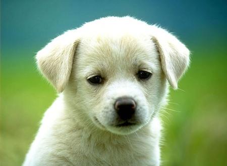 perrito triste