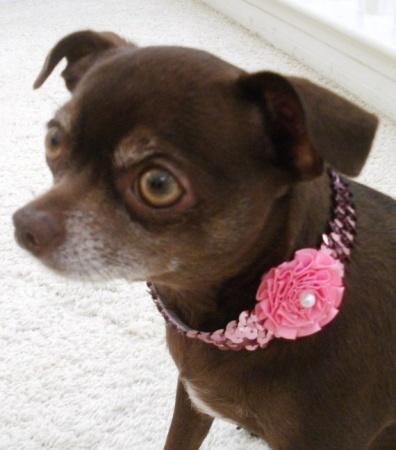 Collares para perros de moda mascot house for Collares para perros