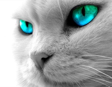 Niño con ojos de gato, puede ver en la oscuridad Fondos-gatos-p