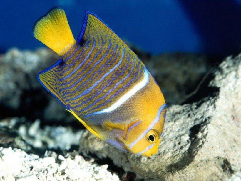 Enfermedades de los peces archives mascot house - Peces tropicales fotos ...