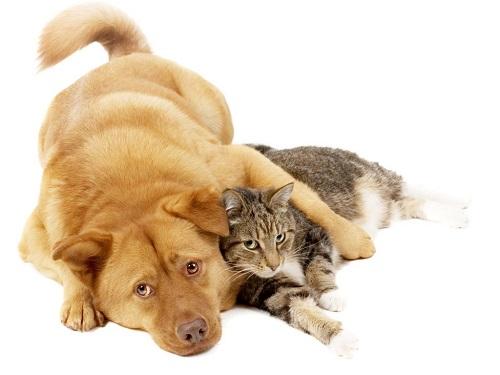 alimentos que no debes de dar a tus mascotas 2
