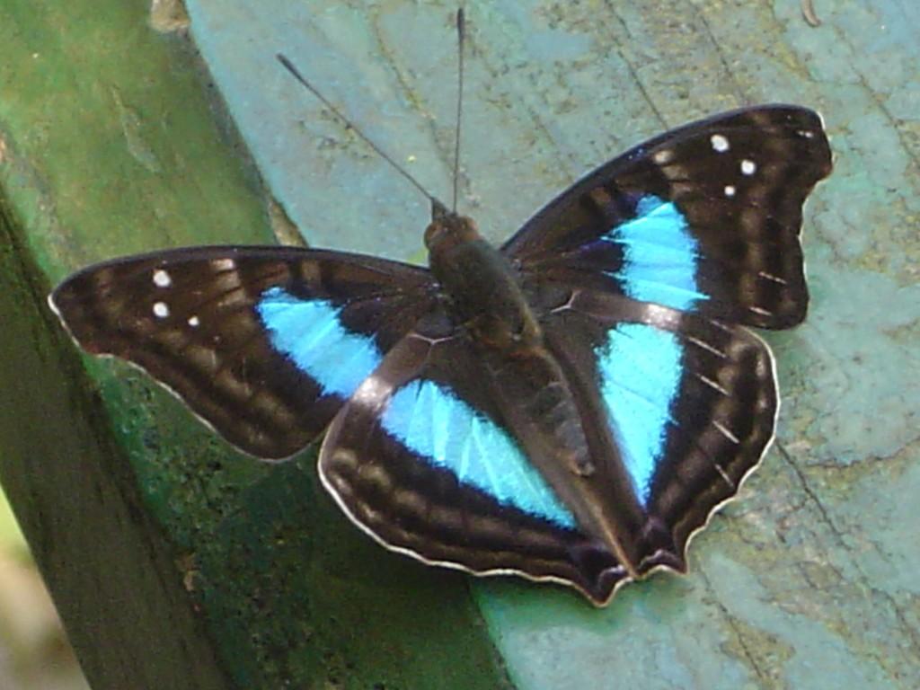 Cría mariposas y échalas a volar