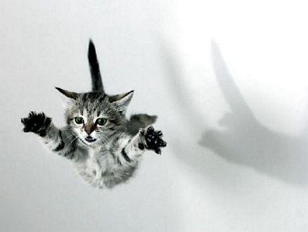 ataca-gato
