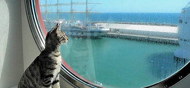 gato-viajero-620x288.jpg