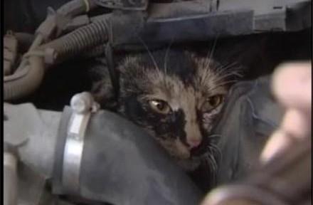 gato-motor-coche-440x288.jpg