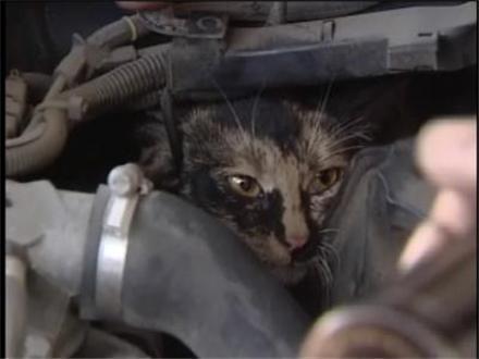 gato-motor-coche