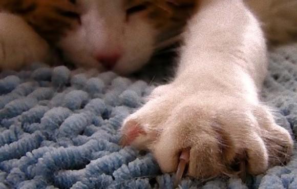 uñas-gato